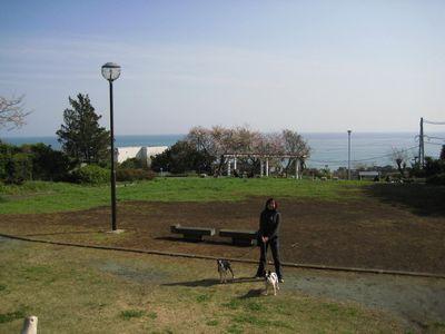 大磯公園1.jpg