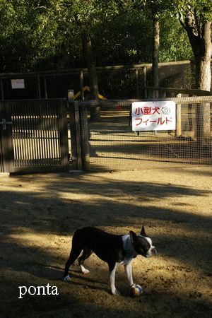 小型犬.jpg